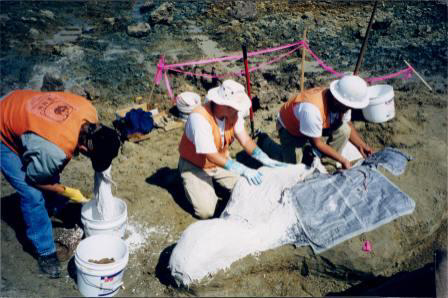 Plaster Jacketing Fossil for Transport 2