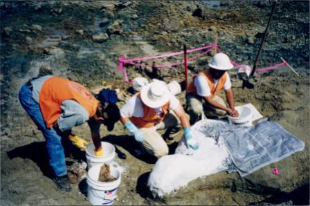 Plaster Jacketing Fossil for Transport