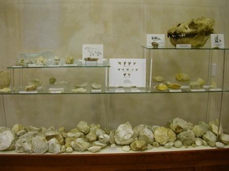 Pecten Reef Display Case